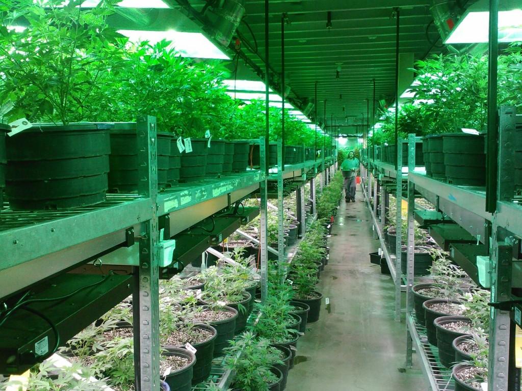 marijuana (2)