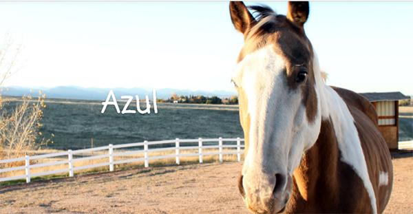 HorseRANCH_SIZED